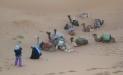 judali_camels